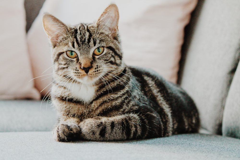 O pisică este primar de onoare în Talkeetna – Aşa, #casastiti